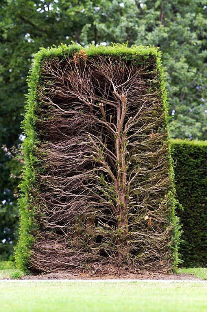 #16 Živý plot v reze